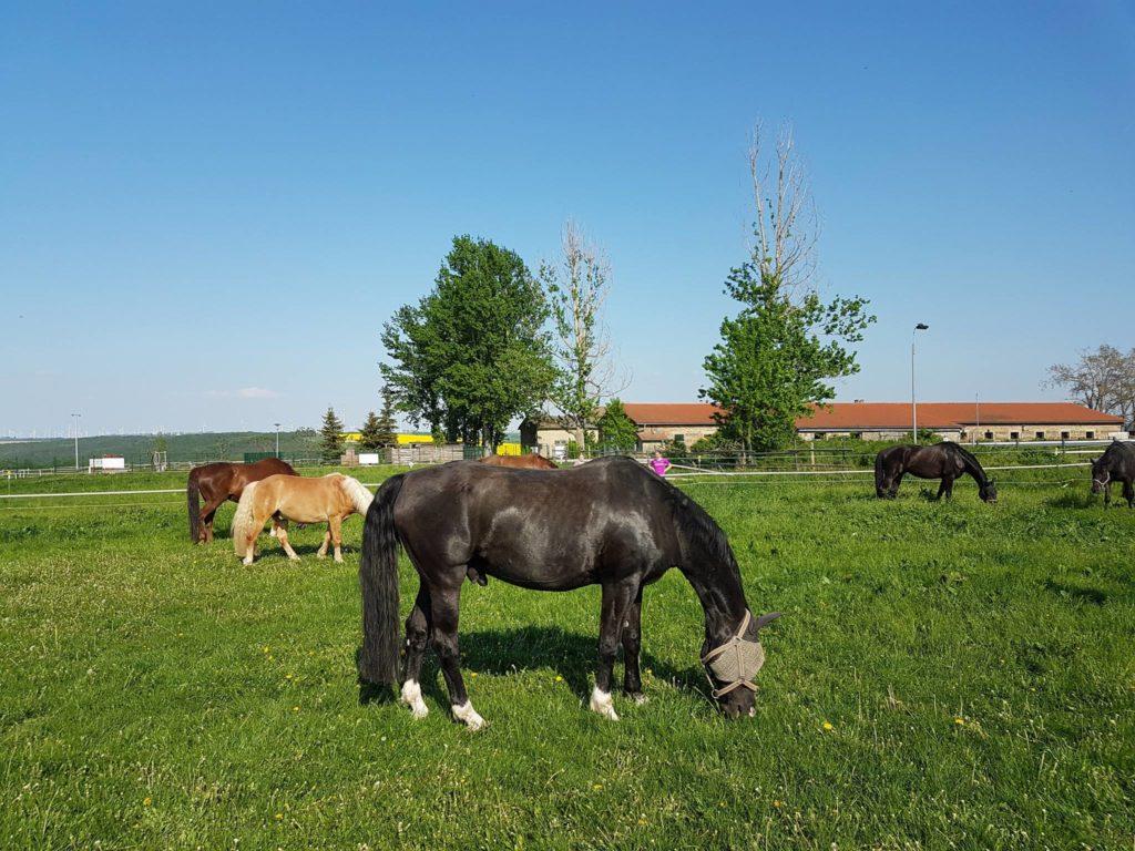 Die LAG fördert die artgerechte Pferdehaltung seit 1989. Wir zertifizieren Stallbetriebe, beraten und unterstützen sie beim Planen und Gestalten von artgerechten Haltungsbedingungen. Pferdebesitzern helfen wir bei der Suche nach dem passenden Stall. Dabei steht das Wohl der Pferde immer im Mittelpunkt.